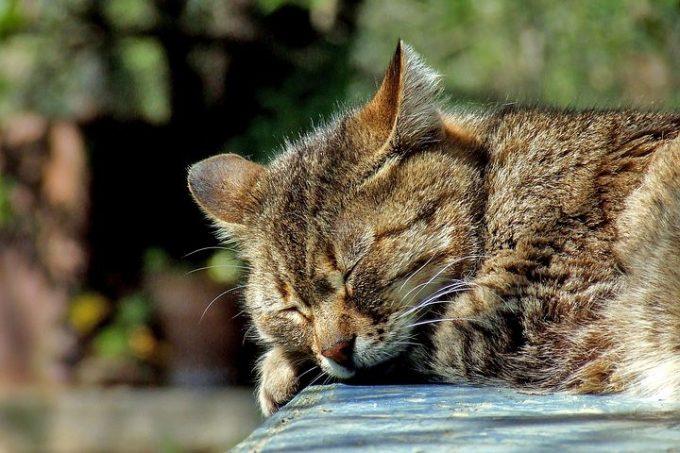 身長 伸びる 睡眠