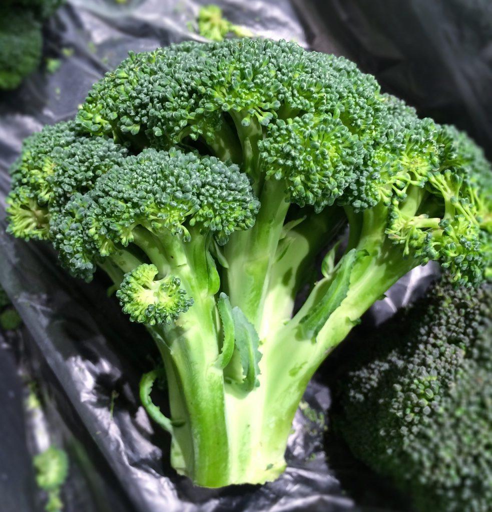 ブロッコリー 茎 栄養