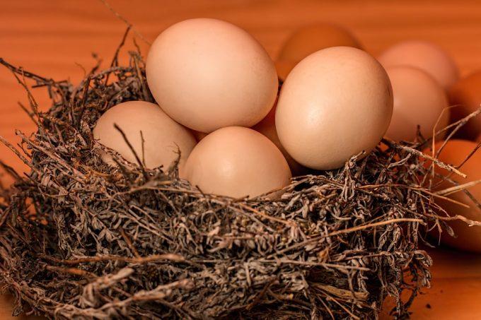 卵 タンパク質