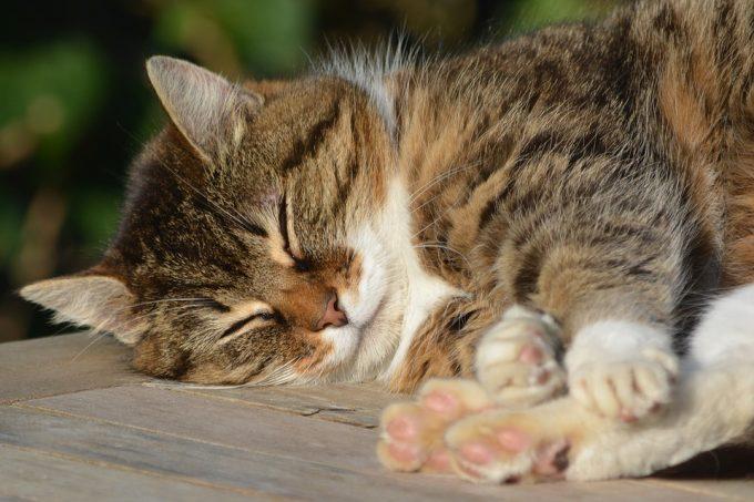 筋トレ 効果 睡眠