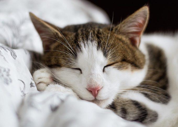超回復 睡眠