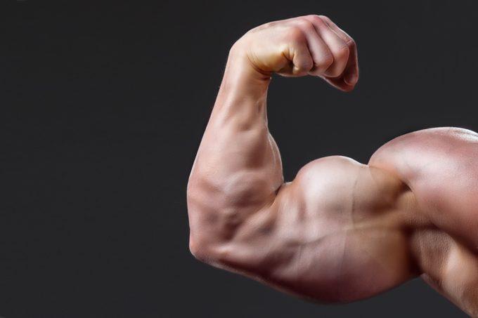 使える筋肉